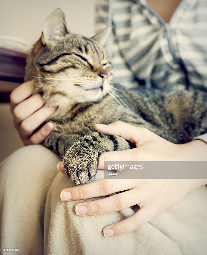 Happy cat : Stock Photo