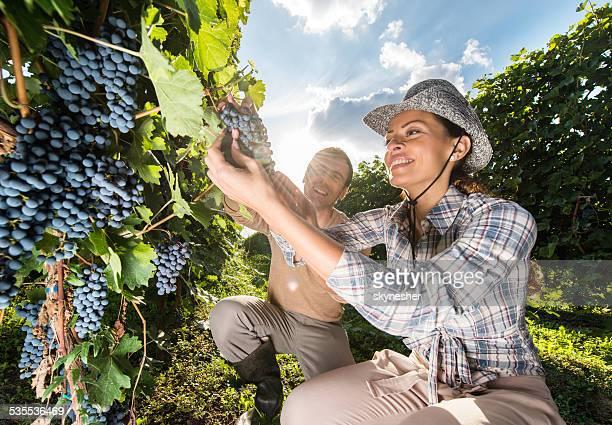 Happy couple in vineyard.