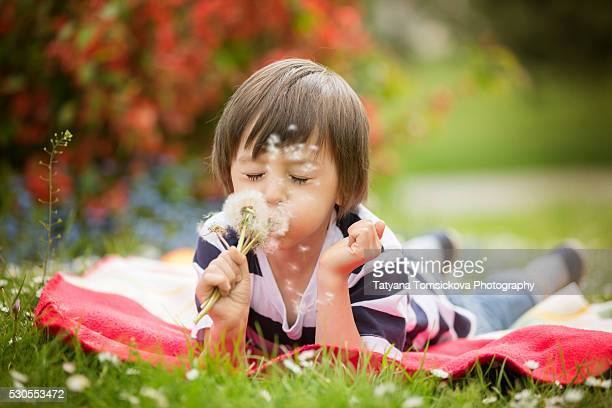 Happy cute caucasian boy, blowing dandelion outdoors in spring park