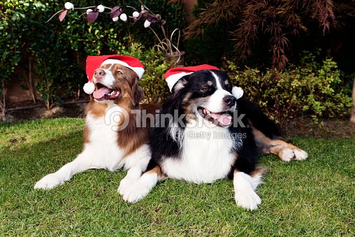 happy dog couple happy new year stock photo