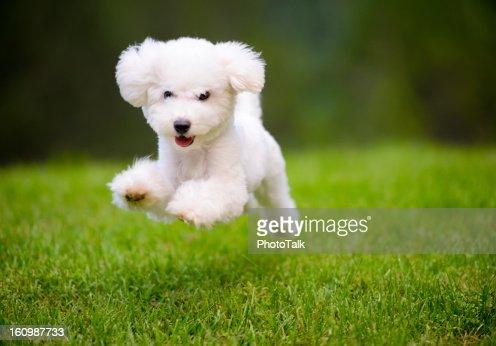 Cão feliz a correr em relvado rápida
