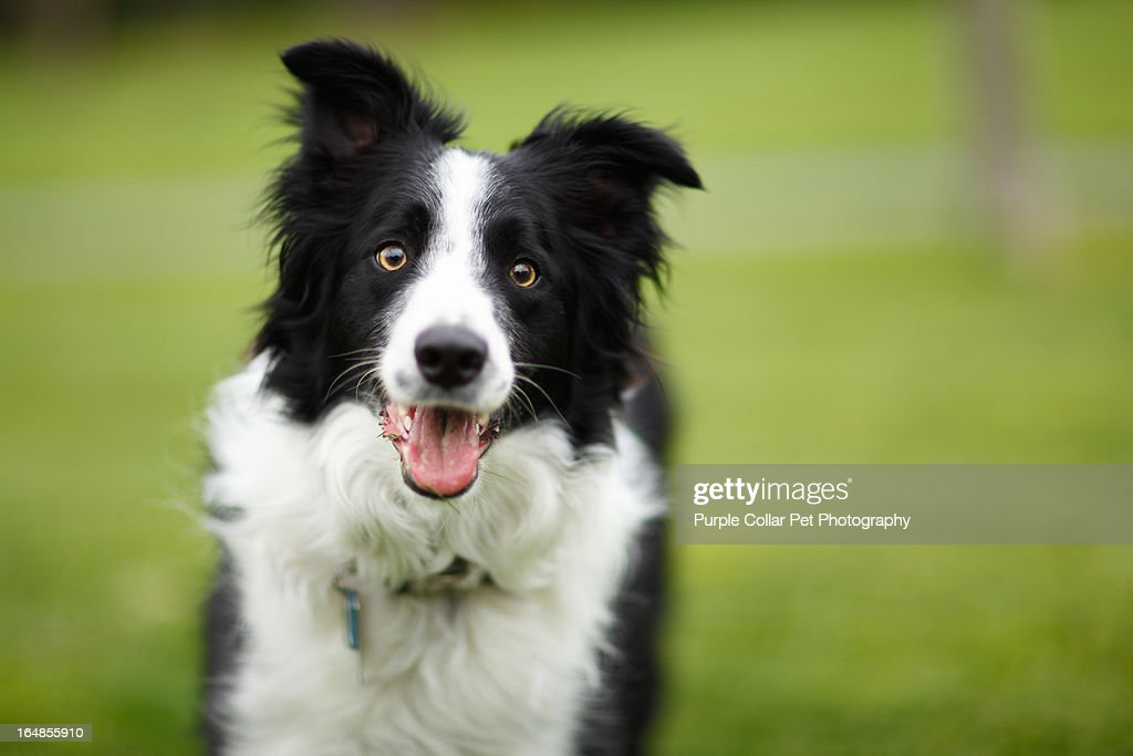 Happy Dog Outdoors