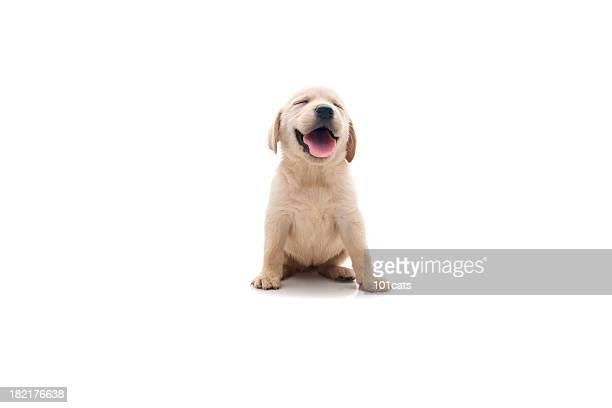 ハッピーな犬