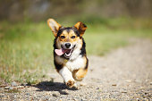 Happy Dog Running Outdoors