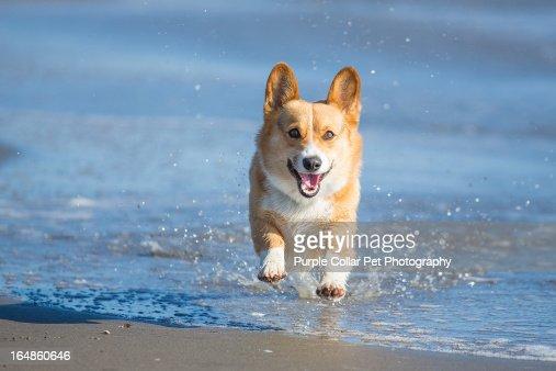 Happy Dog Splashing Through Water