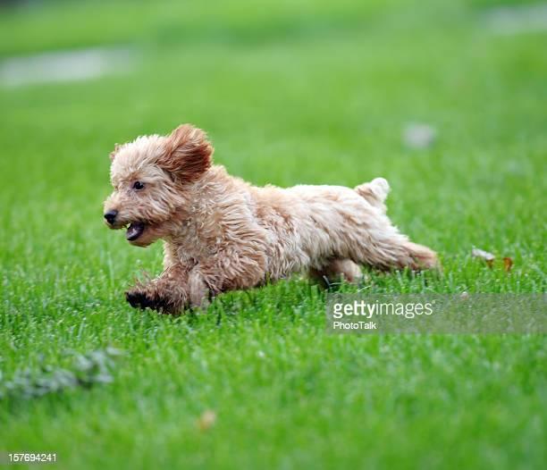 ハッピーな犬用高速に起動芝生