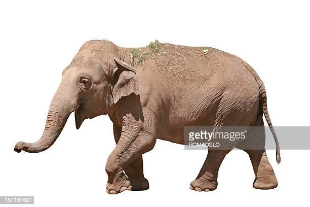 Heureux éléphant isolé sur blanc 2