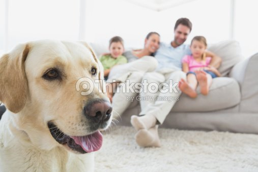 Happy family sitting on couch with their pet labrador in foreground : Stock-Foto