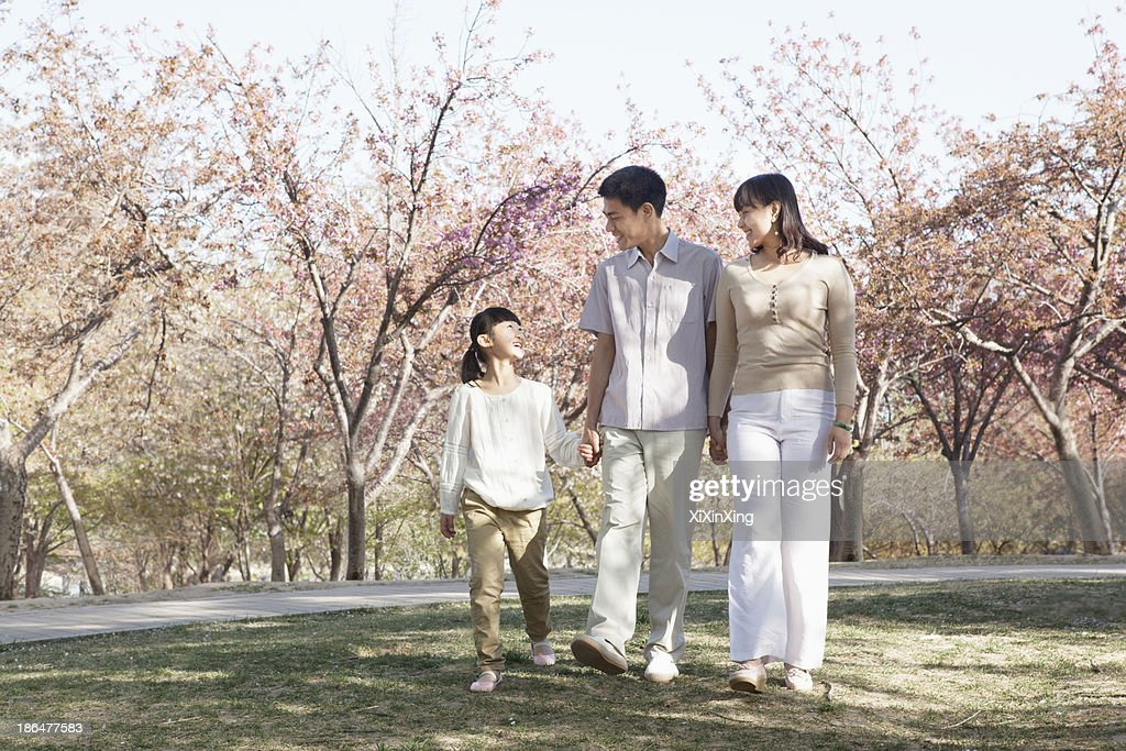 Happy family taking a walk amongst the cherry trees in a park in springtime, Beijing : Stock Photo