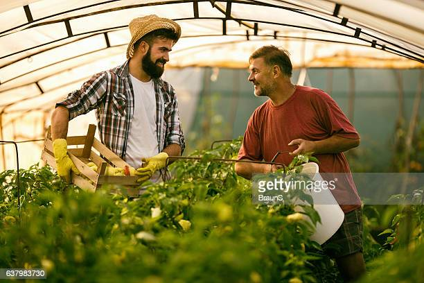Happy farm workers talking to each other in polyethylene tunnel.