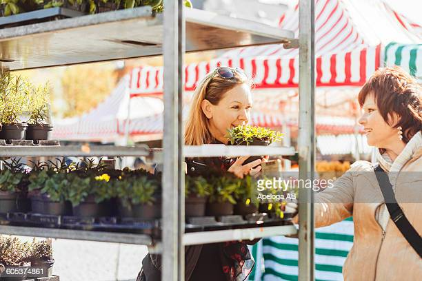 Happy female friends purchasing plants in market at town square