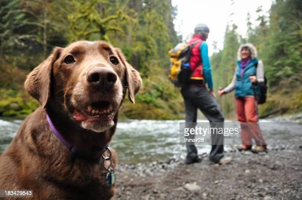 Happy hiking dog