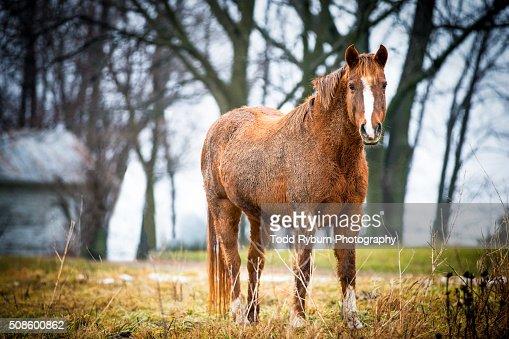 Happy Horse : Foto de stock