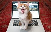 Happy kitten sitting laughing on a laptop keyboard