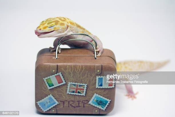 Happy lizard and sticking out tongue carrying a suitcase because he is going on vacation