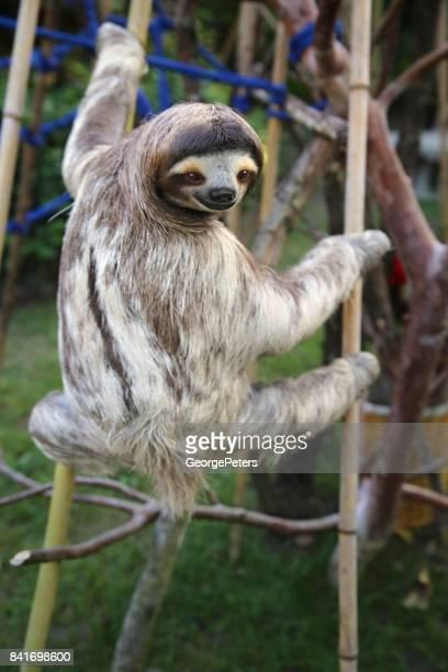 Happy Male Sloth