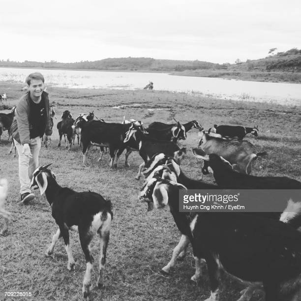 Happy Man Looking At Goats On Field