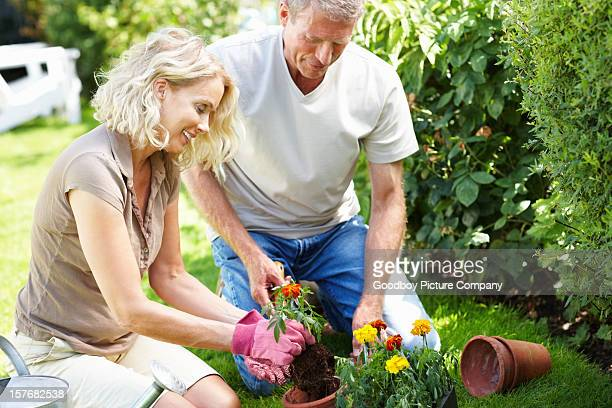 Happy mature couple planting flowers in their garden