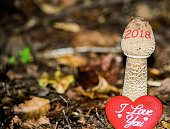 This baby forest mushrrom is growing up fast from the ground with the written 2018 term on its cap. This conceptual photo represents the countdown progress of the coming New Year 2018. The picture als