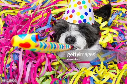 happy new year dog celberation : Stock Photo