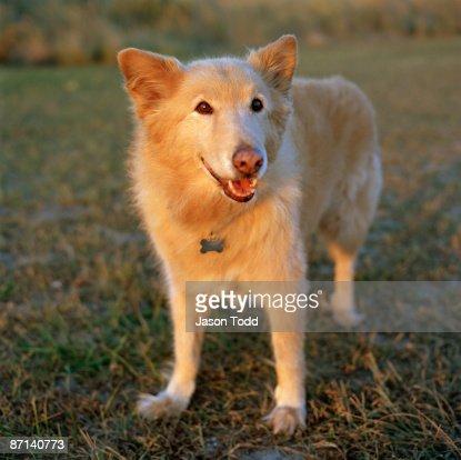 happy old dog : Stock Photo