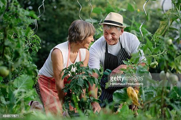 Happy Senior Couple In Garden
