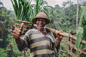 Shot of happy senior farmer giving thumbs up. Senior man smiling and carrying a yoke on his shoulders with seedlings.
