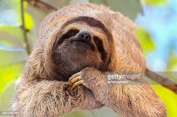 Sloth toes! Or, uh... fingers? Is there a difference for sloths?