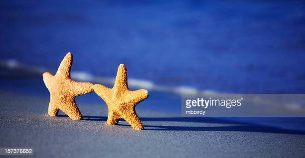 Casal feliz Estrela-do-mar