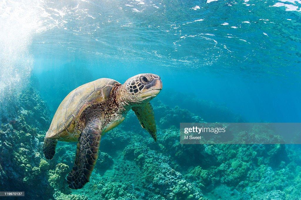 Happy turtle : Stock Photo