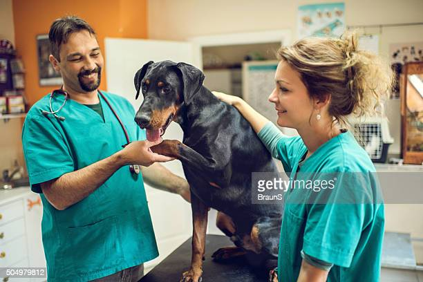 Feliz veterinario de contar con un examen médico con Doberman.