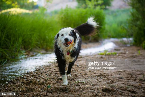 Happy Wet Dog