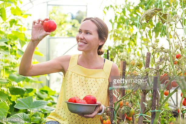 Happy woman looking at harvested tomato in a greenhouse