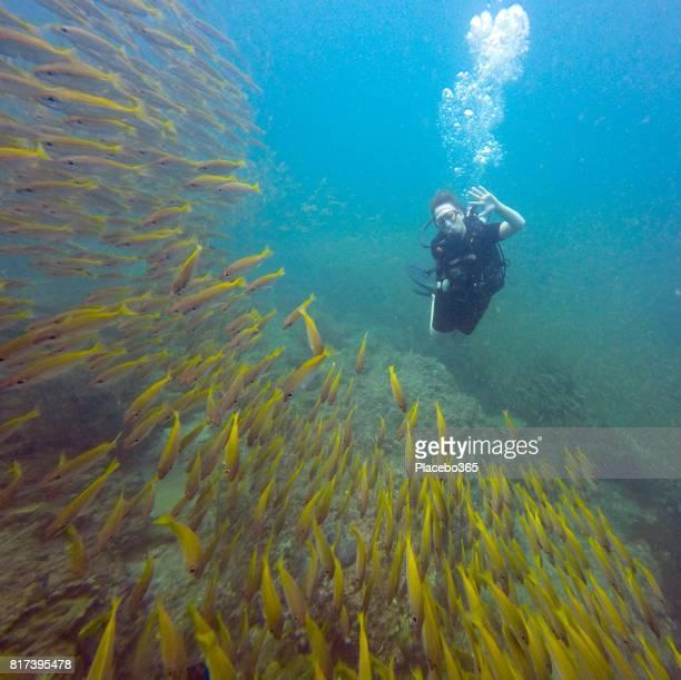Happy Woman Scuba Diver in Shoal of Fish
