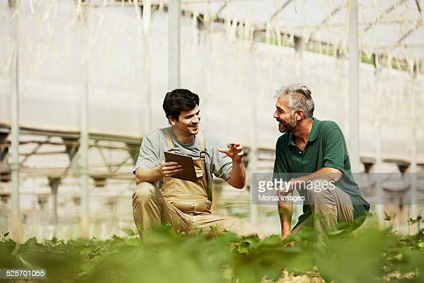 Happy workers discussing in greenhouse