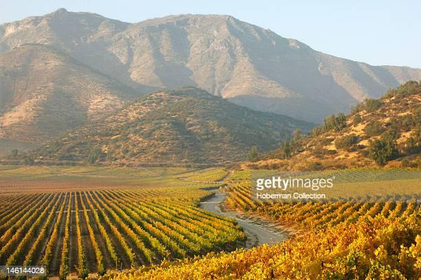 Haras de Pirque Vineyards Chile