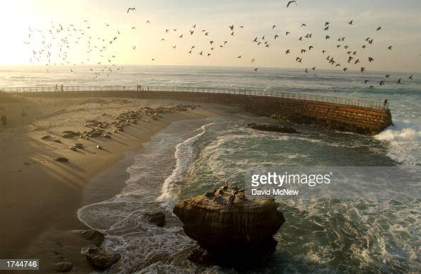 Harbor seals and birds occupy Children's Pool Beach on January 24 2003 in La Jolla California Since taking over the beach the area has been named...