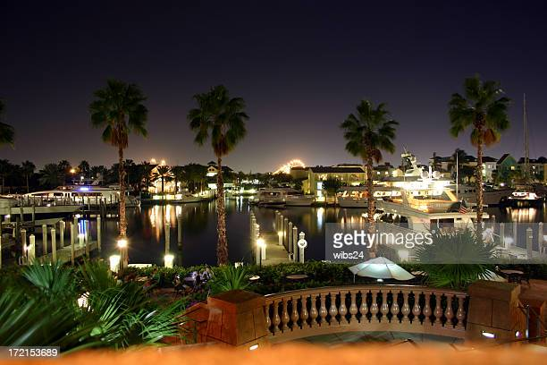 Harbor view through palm trees at night