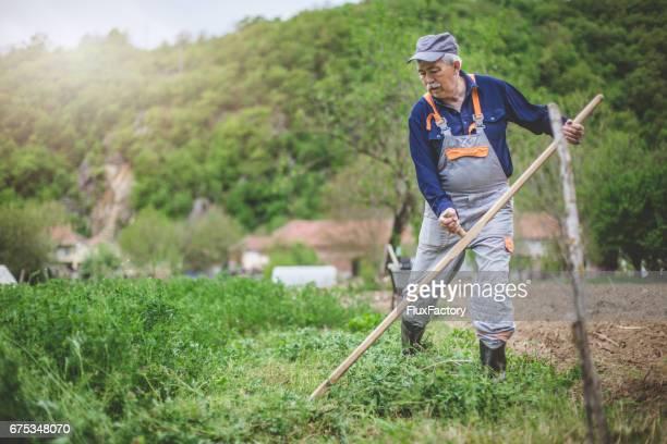 Hard work in the field