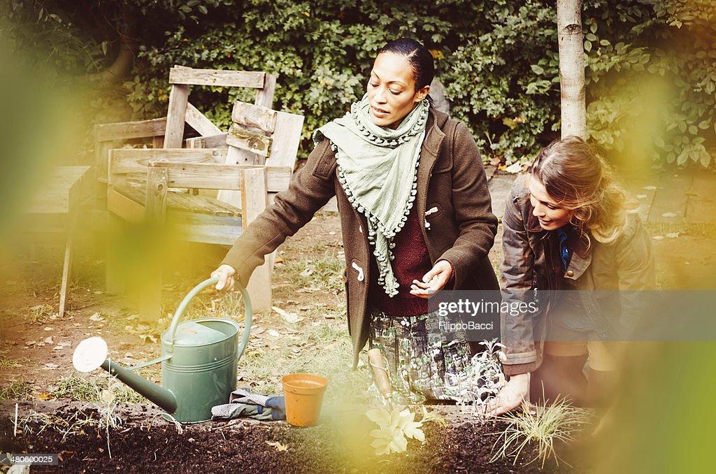 Hard Work In The Garden : Stock Photo