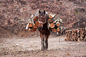 Horse carrying chopped wood on his back