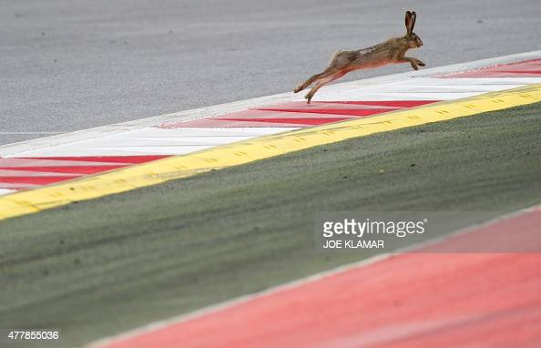 A hare runs on the course during the third practice session at the Red Bull Ring in Spielberg on June 20 ahead of the Austrian Formula One Grand Prix...