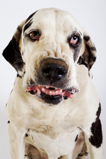 Angry Dog Stock Photos and Pictures | Getty Images