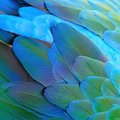 Green bird plumage, Harlequin Macaw feathers, nature texture background