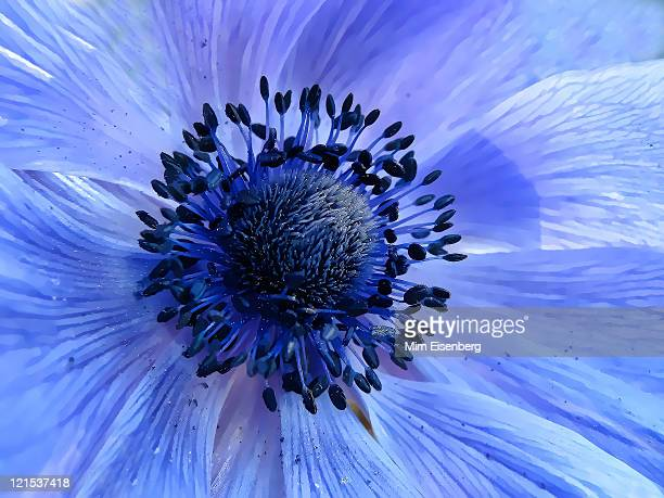 Harmony Blue