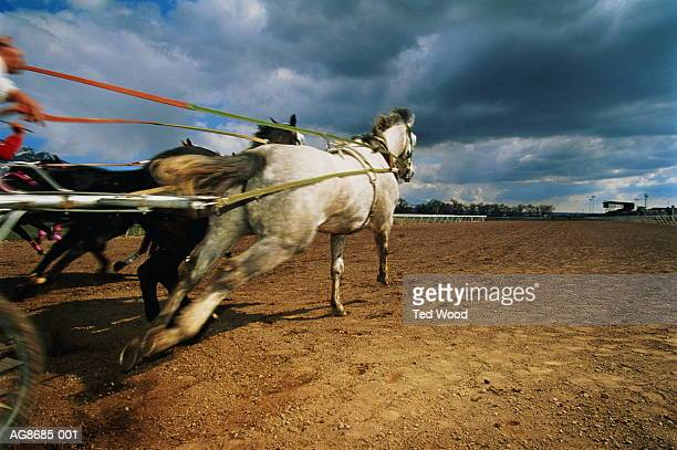 Harness racing, Ogden, Utah, USA