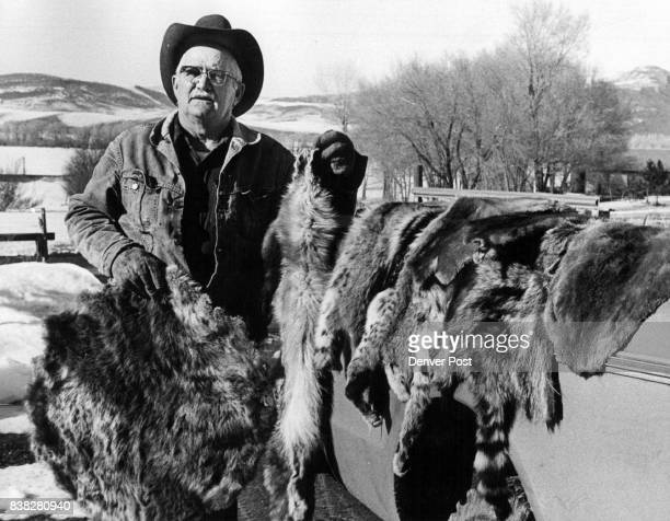 Harold Wixson Shows some hides he has tanned and saved through the years Among them are bobcat fox mink pine morten beaver raccoon and skunk which...