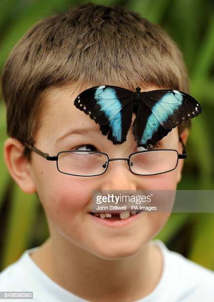 Harry Brown aged 7 gets a close up look at one of Hundreds of butterflies that were released to mark the launch of the Natural History Museum's...