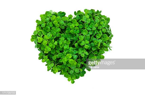 hart formed by clover