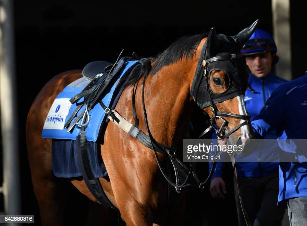 Hartnell after track gallop at Moonee Valley Racecourse on September 5 2017 in Melbourne Australia